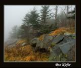 Fog on Clingman's Dome