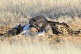 Cheetah Cubs II.jpg