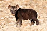 Hyena Pup III.jpg