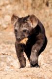 Hyena Pup II.jpg
