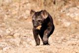 Hyena Pup I.jpg