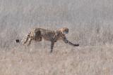 Cheetah C 1200.jpg