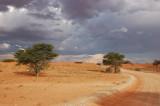 Desert road 2.