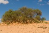Carcasson dune