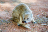 Mongoose 1