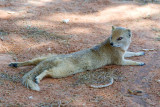 Mongoose 2