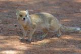 Mongoose 3