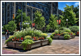 A Floral Display in Downtown Ottawa