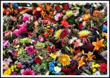 Des fleurs de bord à bord