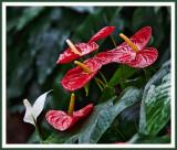 Les antennes paraboliques floraux