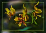 Les Fleurs Extraterrestre