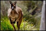 Kangaroo Island - More Soon