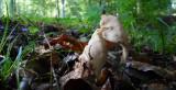 Eléphant dans sa savane de feuilles mortes
