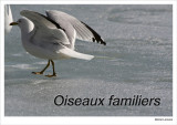 Familiar Birds