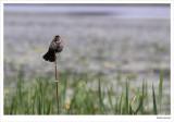 Oiseau-06w.jpg