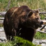 2011-07-30 Woodland Park Zoo