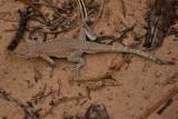 A lizard tale
