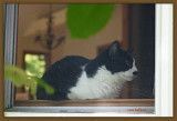 Kitty In The Window.jpg