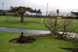 Wind Damage 03/01/2012
