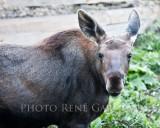 hf2011_haliburton_animals