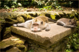 Life In The Monkey Forest