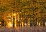 Teton Sunburst