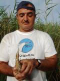 El representante de la SEO en el Delta del Ebro realizando trabajo de campo con el avetorillo