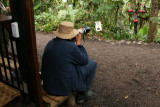 Shooting hummingbirds
