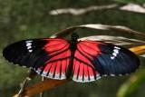 Prettier butterfly