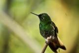 First of many hummingbird photos