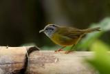 Another nice bird