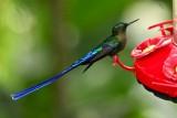 Cool looking hummingbird