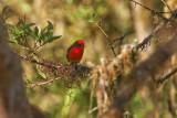 Birds of the Galapagos