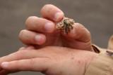 ET holding a hermit crab