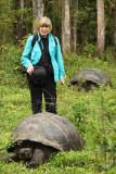 Ginny in a thundering herd of tortoises