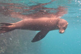 Another playful sea lion