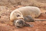 Cute mom and cub shot