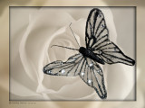 December 23rd: The Butterfly