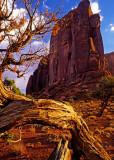 Juniper and butte, Monument Valley, Navajo Tribal Park, AZ/UT