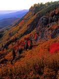 Fall color on Mingus Mountain, Yavapai County, AZ
