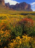 Spring potpourri, Lost Dutchman State Park, AZ