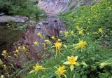 Columbine at West Fork of Oak Creek Canyon, AZ