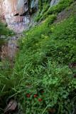 Lush alcove in West Fork of Oak Creek Canyon, AZ