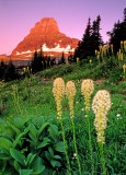 (CR35) Alpenglow on Beargrass and Mt. Clemens, Glacier N. P., MT