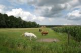 Wagenborgen - Hondshalsterpad