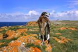 Orange Rock Dog