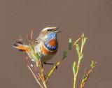 Birds - Trips