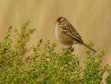 Birds -- Audubon Photography Workshop, November 2011