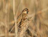 Birds -- Cascade Ranch, Winter 2011-12