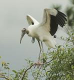 Vultures and Storks